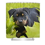 Hey Here I Am Shower Curtain by Heiko Koehrer-Wagner
