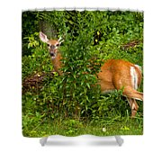 Hey I Eating Here Shower Curtain