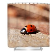 Hey There Little Lady Bug Shower Curtain