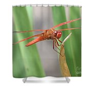Hi Dragon Fly Shower Curtain