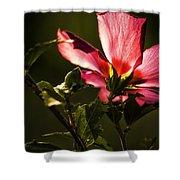 Hibiscus 03 Shower Curtain