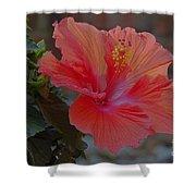 Hibiscus 1 Shower Curtain