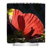 Hibiscus 10 Shower Curtain