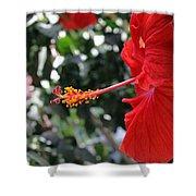 Hibiscus 2685 Shower Curtain