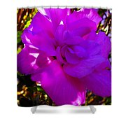 Hibiscus 4 Shower Curtain