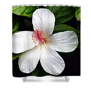 Hibiscus 54 Shower Curtain