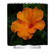 Hibiscus 9 Shower Curtain