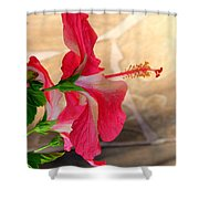 Hibiscus Along The Walk Way Shower Curtain