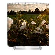 Hibiscus At Sunrise  Shower Curtain