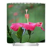 Hibiscus Ballerina Shower Curtain