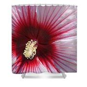 Hibiscus-callaway Gardens Shower Curtain