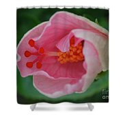Hibiscus Flower Blooming Shower Curtain