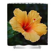 Hibiscus Flower In Puerto Rico Shower Curtain