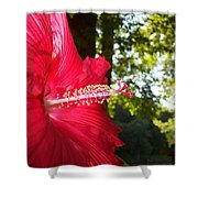 Hibiscus - Lord Baltimore Shower Curtain