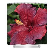 Hibiscus Night Fire 2 Of 2 Shower Curtain