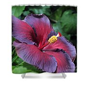 Hibiscus Night Fire Shower Curtain