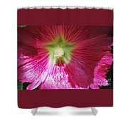 A Hibiscus Discovered On Boston Common Shower Curtain