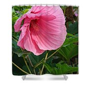 Hibiscus Profile Shower Curtain