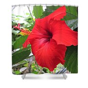 Hibiscus Red Shower Curtain