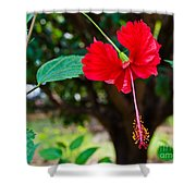 Hibiscus Rosa-sinensis / China Rose Flower Shower Curtain