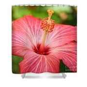 Hibiscus - Square Shower Curtain by Carol Groenen