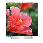 Hibiscus Summer Shower Curtain