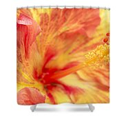 Hibiscus Shower Curtain by Tony Cordoza