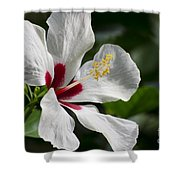 Hibiscus White Wings Shower Curtain