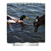 Hibred Ducks Swimming In Beech Fork Lake Shower Curtain