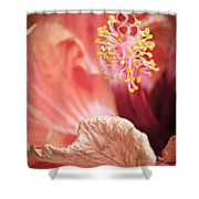 Hibuscus Talking  By Zina Zinchik Shower Curtain