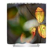 Hidden Forest Leaves Shower Curtain
