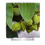 Hidden Fruit Shower Curtain