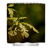 Hidden Leaves With A Green Back Ground Shower Curtain by Robert D  Brozek