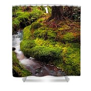 Hidden Woodland Corner. Benmore Botanical Garden. Scotland Shower Curtain
