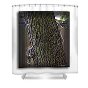 Hide And Seek Squirrels Shower Curtain