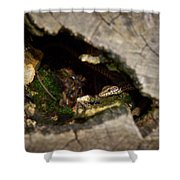 Hiding. Montorfano. Cologne Shower Curtain