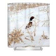 Hiding Rooster Shower Curtain