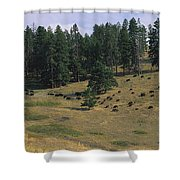 High Angle View Of Bisons Grazing Shower Curtain