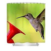 High Flying Hummingbird Shower Curtain