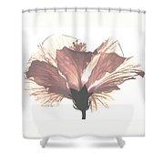 High Key Hibiscus Shower Curtain