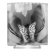 High Key Orchid Shower Curtain by Adam Romanowicz
