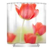 High Key Tulips Shower Curtain