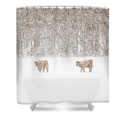 Highland Cattle In The Snow Shower Curtain