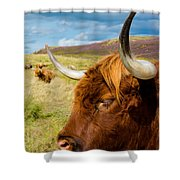 Highland Cattle On Scottish Pasture Shower Curtain