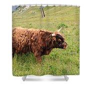 Highland Caw Shower Curtain