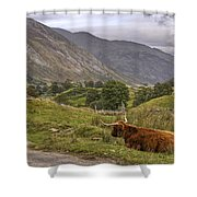 Highland Cow In Scotland Shower Curtain