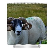 Highland Sheep Shower Curtain