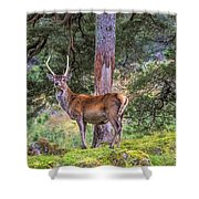Highland Stag Shower Curtain