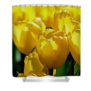 Hill Of Golden Tulips Shower Curtain