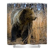 Hillside Grizzly Shower Curtain